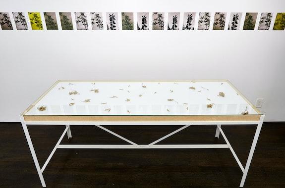 Installation view: <em>Matthew Schrader: M. Obultra</em> <em>3</em>, White Columns, New York, 2021. Courtesy the artist and White Columns. Photo: Marc Tatti.