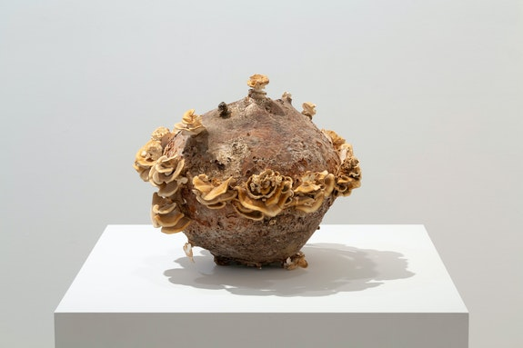 Nour Mobarak, <em>Sphere Study 6 (Old Money)</em>, 2020. Trametes versicolor, wood, 11 1/4 x 12 1/2 x 12 1/2 inches. Courtesy the artist and Miguel Abreu Gallery, New York. Photo: Stephen Faught.