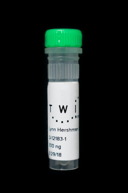 Lynn Hershman Leeson, <em>Glass Vial of Synthetic DNA</em>, 2018. Molecular reduction converted by Twist Bioscience, San Francisco, 1 x 3 in. Courtesy the artist; Bridget Donahue, New York; and Altman Siegel, San Francisco.