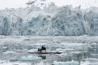 Ludovico Einaudi playing his <em>Elegy for the Arctic</em> (2016), in the Arctic. Photo: Pedro Armestre/Greenpeace