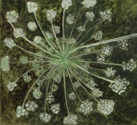 Lois Dodd, <em>Queen Anne's Lace, Backview of Head</em>, 2018. Oil on Masonite, 11 x 12 inches. Courtesy Alexandre Gallery.