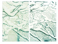 <I> Snow Trees #3, (2006). 72
