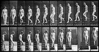 Woman walking downstairs from Eadweard Muybridge's Complete Human and Animal Locomotion, 1887
