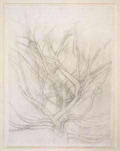 Sylvia Plimack Mangold,