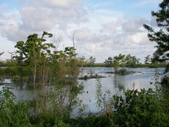 A plain marsh.
