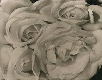 "Tina Modotti, ""Roses,"" c. 1924; platinum print.  Courtesy Throckmorton Fine Art."