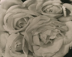 "Tina Modotti, ""Roses,"" c. 1924; platinum print.  Courtesy Throckmorton Fine Art."