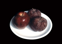 <p>Kazumi Tanaka, <em>Two Apples</em>, 1997 - ongoing. Apples, polychromed plaster, ceramic plate. 7 x 7 x 3 inches. (c).</p>