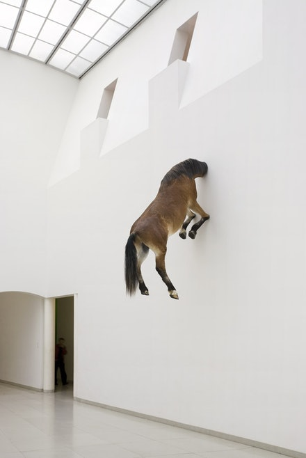 "Maurizio Cattelan, ""Untitled,"" 2007. Taxidermied horse. 1181/8 x 667/8 x 311/2"". Courtesy of the artist and Marian Goodman Gallery, New York."