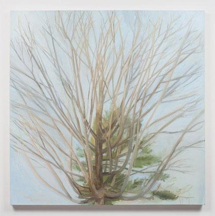 "Sylvia Plimack Mangold, ""Winter Maple,"" 2010. Oil on linen. 44 x 44"". Photo: Joerg Lohse. Image courtesy of Alexander and Bonin."